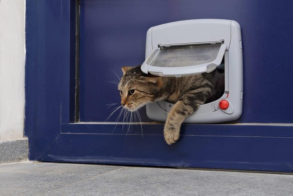 Katze steigt durch Katzenklappe